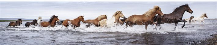 Image of Horses...