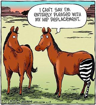 Horse new leg